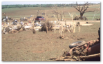 F5 damage at Bridge Creek, OK, May 3, 1999: The house is gone, trees are debarked and ground is scoured.  Source