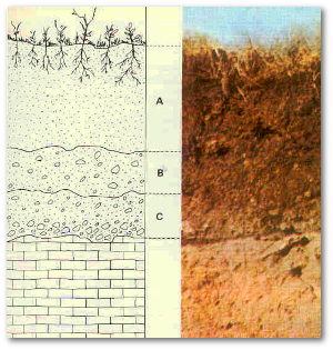 It takes a geologist or a farmer to appreciate soil structure.  Source