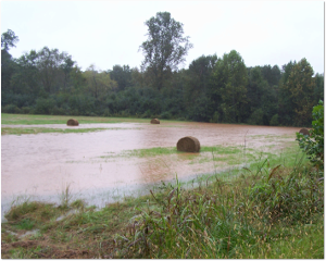 That hay is going to go moldy before it dries out.  Source