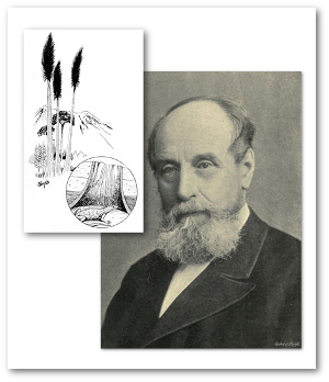 J. William Dawson and the plants and animals of the Carboniferous age.