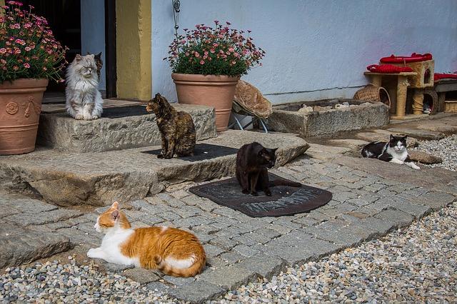 cat-2478349_640