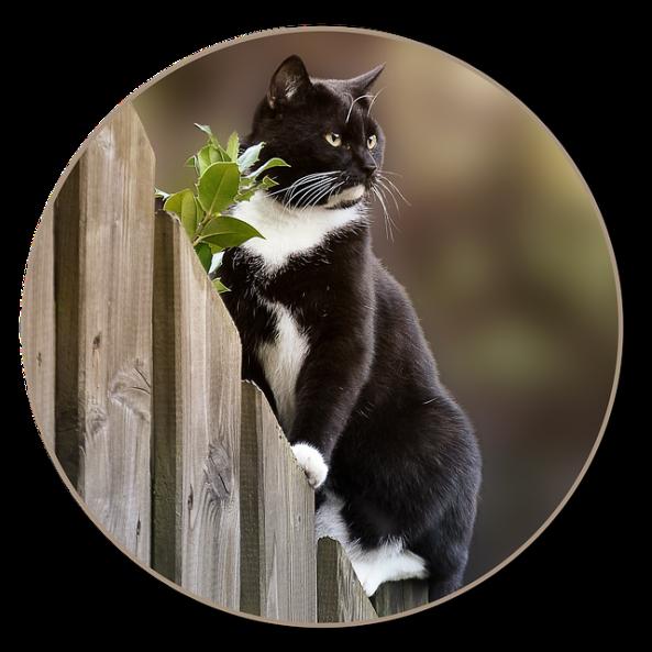 cat-2673449_640