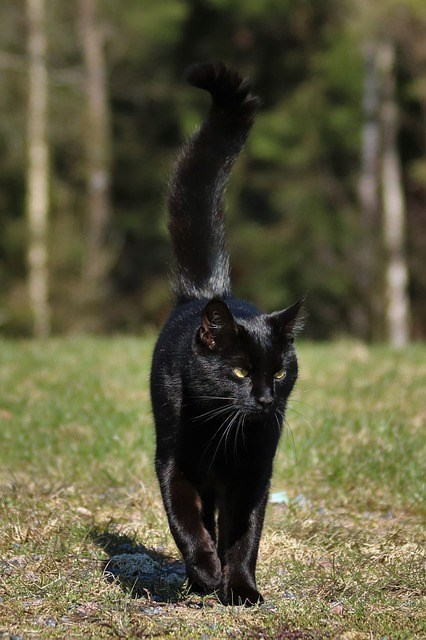 cat-1320160_640