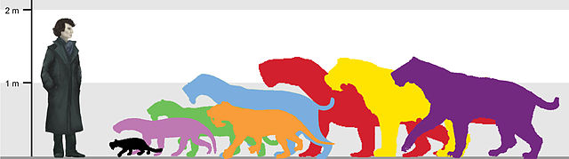 640px-Sabertoothed_predators_size_comparison_(all_6_groups)